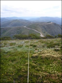 Treeline transect at Mt Hotham