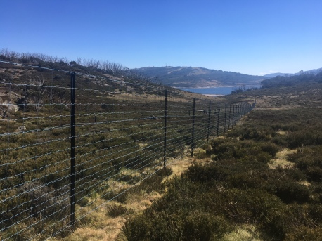 New deer-proof fence erected April 2019
