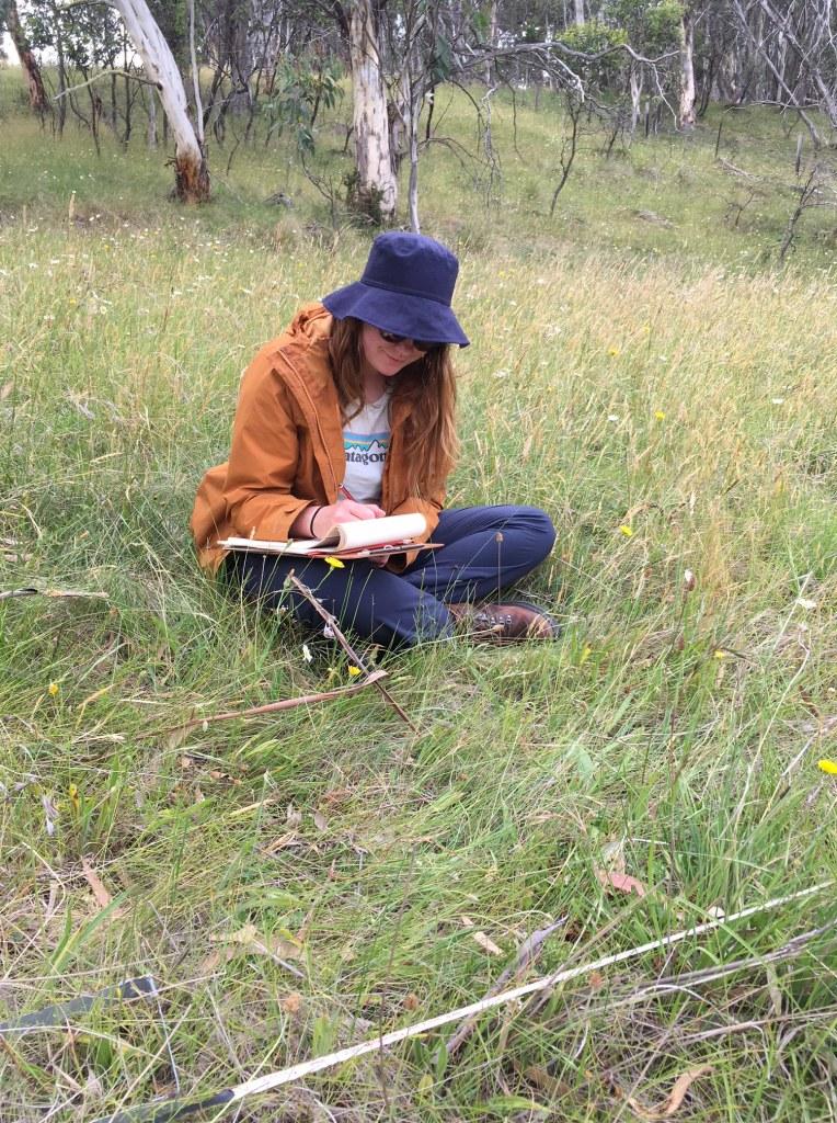 Surveying invasive species at Mt Hotham