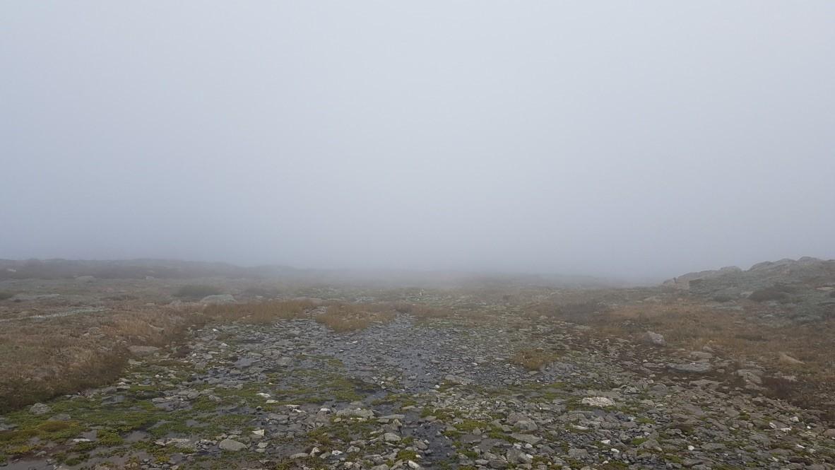 herbland in cloud