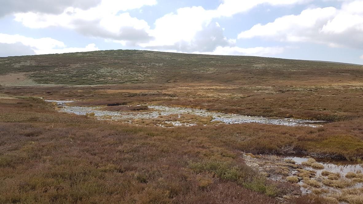 white rocks creek caltha herbland